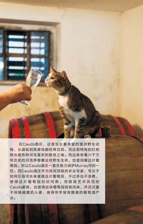 康铎红酒手册-5.png